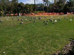 Flamingos.... HUGE Flamingos
