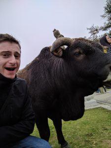 Cows Love selfies!